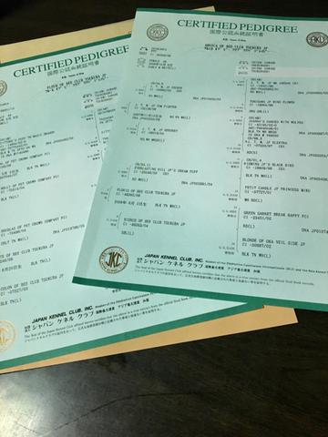 260333D8-C82B-42AC-9E52-CDB43D3CBD2C.jpg
